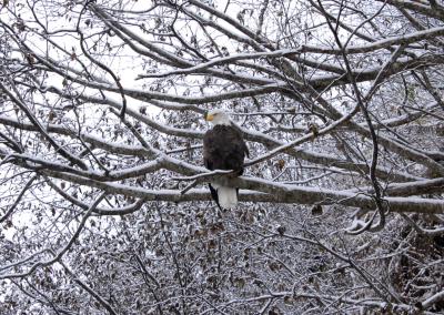 Bald Eagle Photo Portfolio